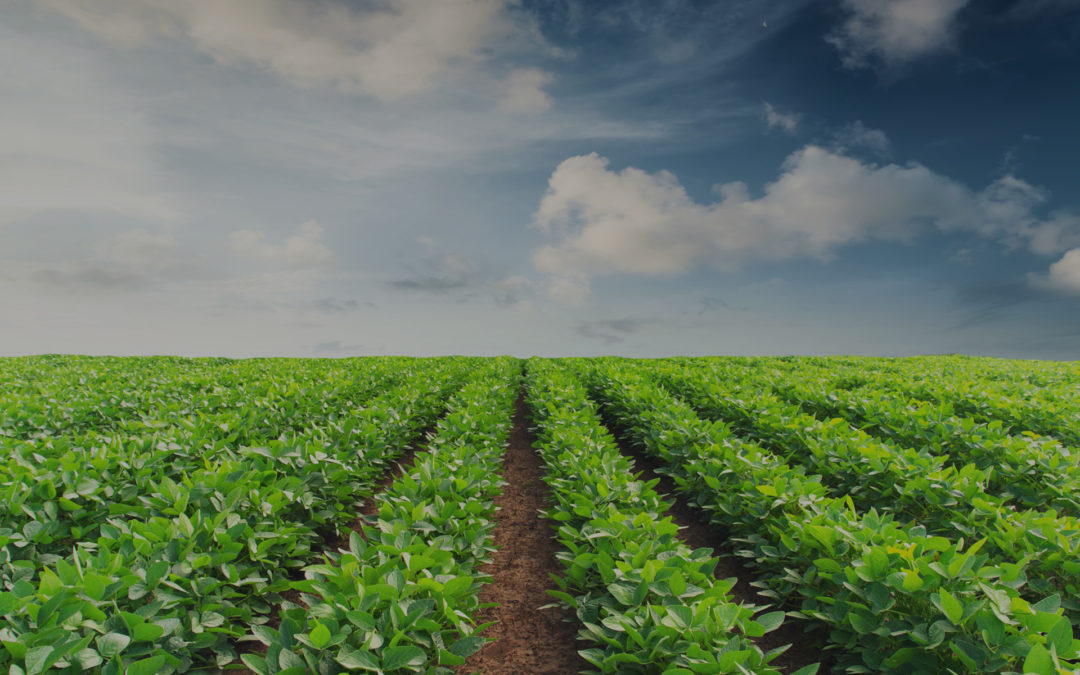 The Future of Food Traceability